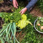 Permaculture Gardening Is The Way Of The Future: How To Embrace It Today