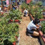Gardeners Creating Sanctuary and Solutions in Food Deserts