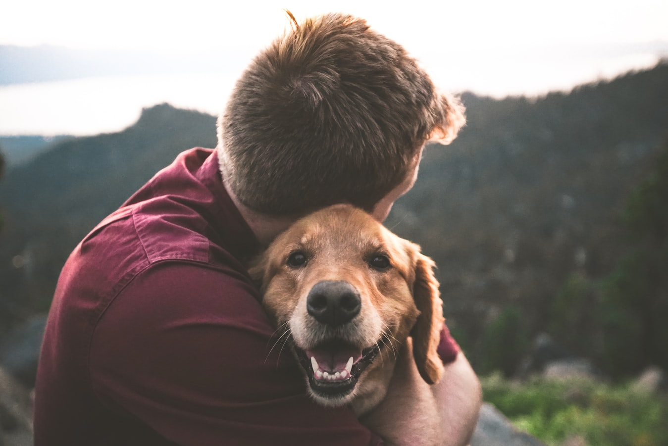 do-emotional-support-animals-deserve-the-same-rights-as-service-animals?