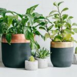 This 7-Step Care Routine Is Like A Spa Day For Your Houseplants