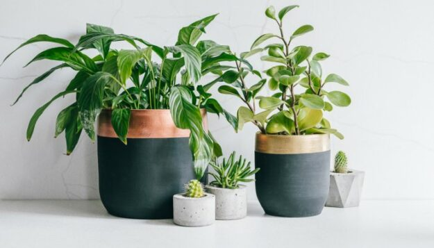 this-7-step-care-routine-is-like-a-spa-day-for-your-houseplants