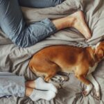The Next-Level Cleaner Every Pet Owner Should Have On Their Radar