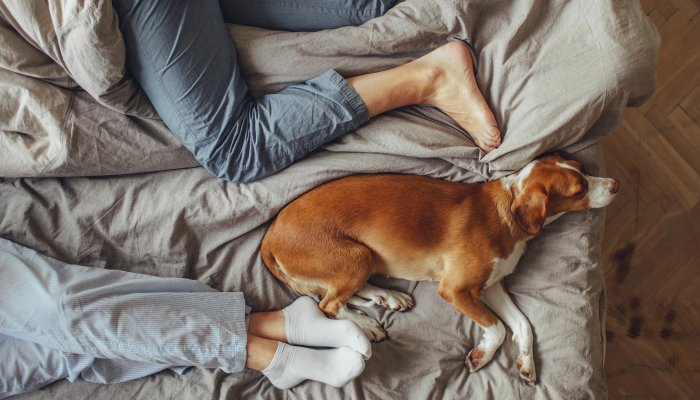 the-next-level-cleaner-every-pet-owner-should-have-on-their-radar
