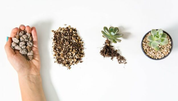 this-is-a-popular-alternative-to-soil-—-but-does-it-actually-keep-plants-alive?