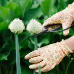 You've Heard Of Superfoods, But What About Superweeds? An MD's Top 6 Sources