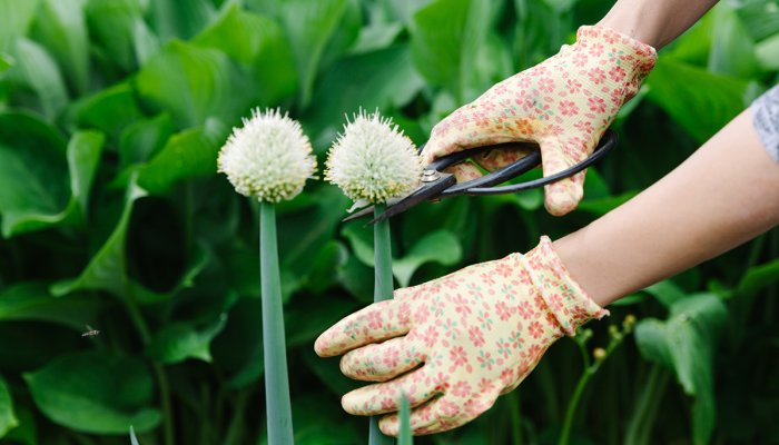 you've-heard-of-superfoods,-but-what-about-superweeds?-an-md's-top-6-sources