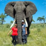 7 Spiritual Teachings You Can Learn From Elephants for a Better Life