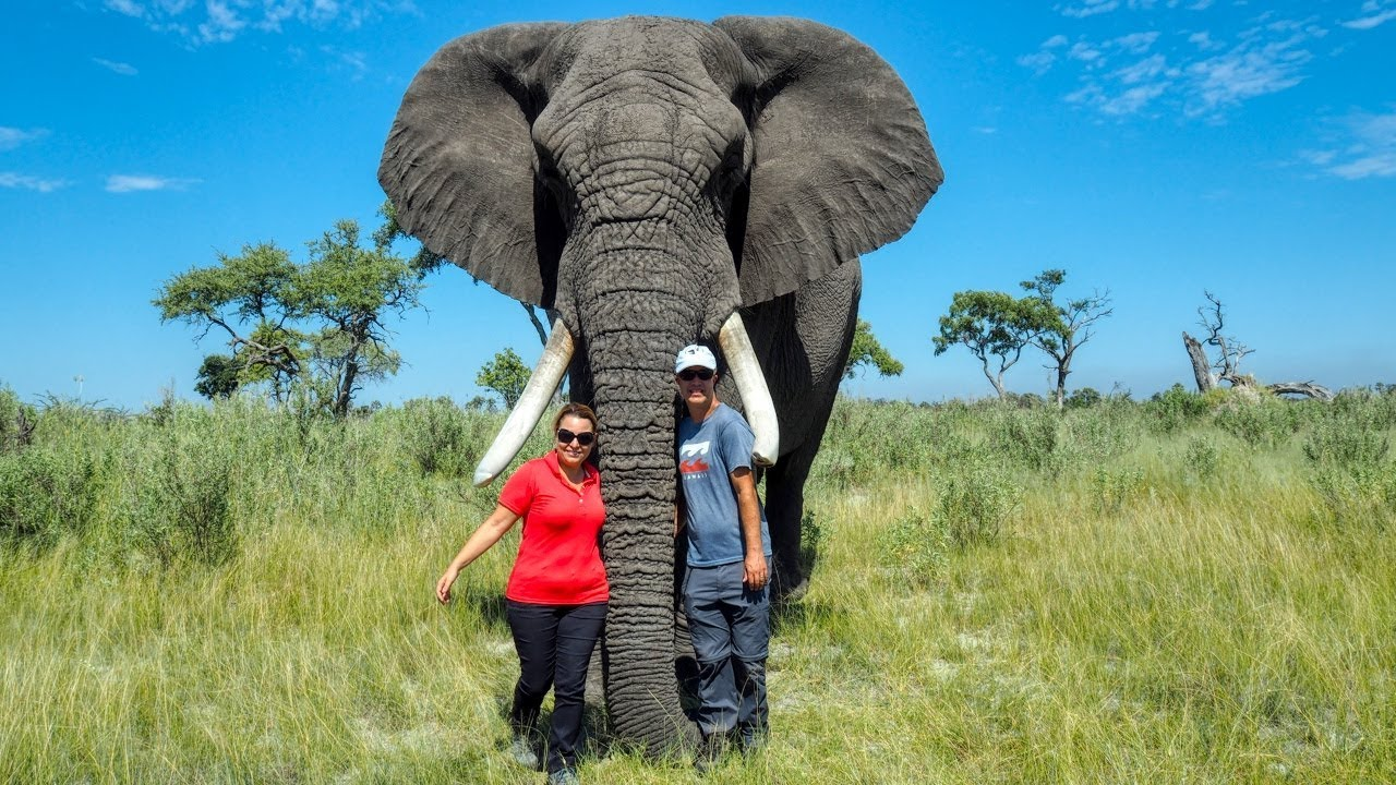 7-spiritual-teachings-you-can-learn-from-elephants-for-a-better-life