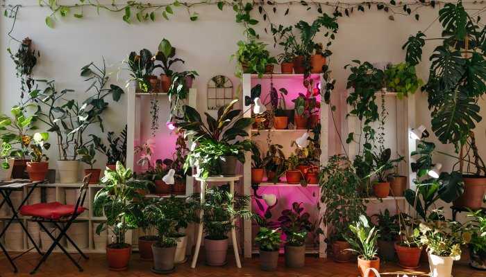 with-this-ikea-hack,-you-can-build-an-at-home-green-wall-in-minutes