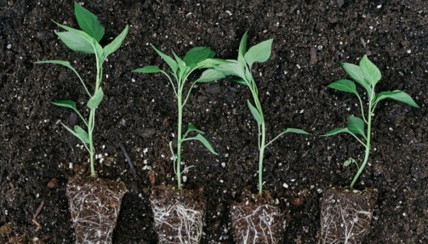 5-quick-ways-to-improve-your-soil-&-naturally-regenerate-your-garden