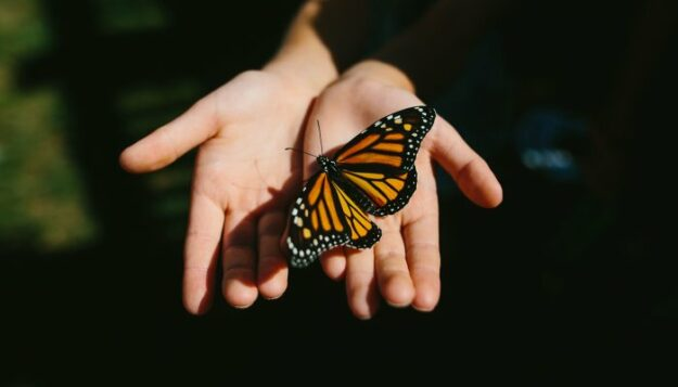 the-spiritual-symbolism-of-the-butterfly-&-what-to-do-when-you-see-one
