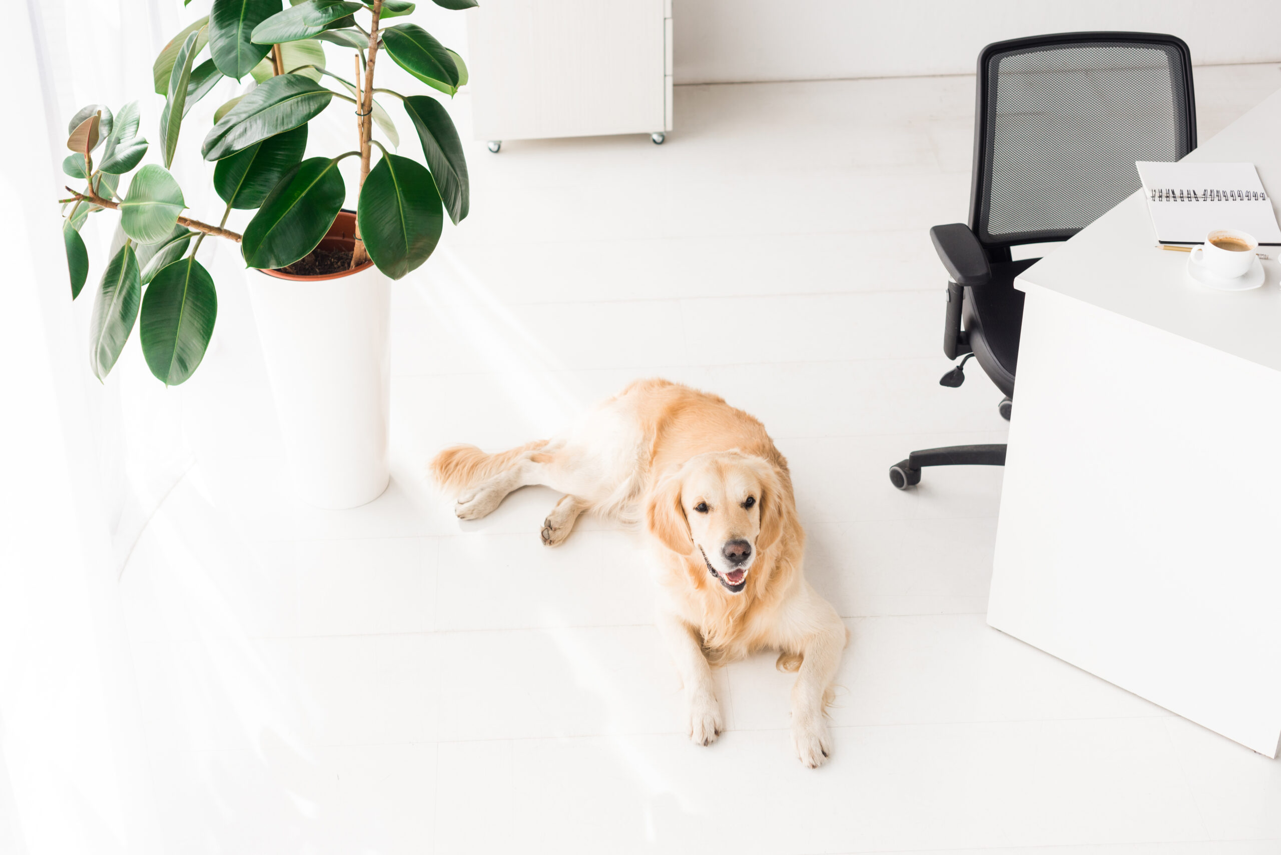 6-reasons-why-companies-should-allow-pets-at-work