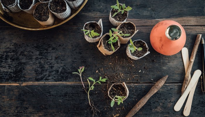 7-seed-starter-kits-that'll-take-your-plants-from-zero-to-hero