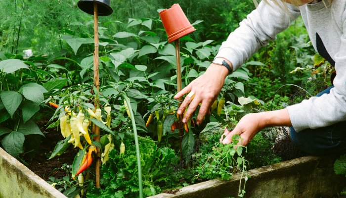the-underrated-plant-your-sunny-vegetable-garden-is-missing