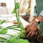 This Root Structure Is A Sign That Your Houseplant Is Having A Glow Up