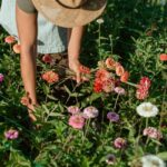 This 2-Second Technique Can Help Flowers Bloom Again & Again