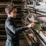 why-i-choose-to-raise-my-kids-with-farm-animals