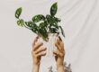 how-to-make-sure-your-houseplant-collection-isn't-harming-the-planet
