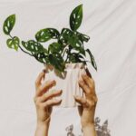 How To Make Sure Your Houseplant Collection Isn't Harming The Planet