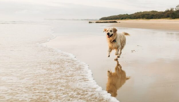 thinking-about-giving-your-dog-cbd?-here's-everything-you-need-to-know