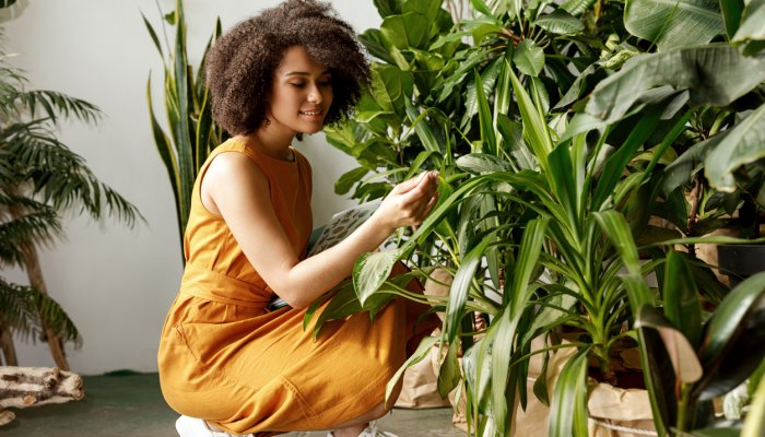 the-biggest-houseplant-mistake-people-always-make-this-time-of-year