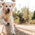 Research Shows A Raw Diet Can Help Dogs With Digestive Issues. Here's How