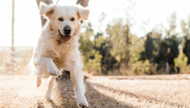 research-shows-a-raw-diet-can-help-dogs-with-digestive-issues.-here's-how