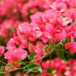 The Vivacious Plant Is Like A Coat Of Fresh Paint For Your Garden