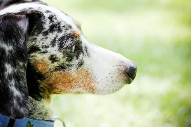 how-to-manage-separation-anxiety-in-dogs