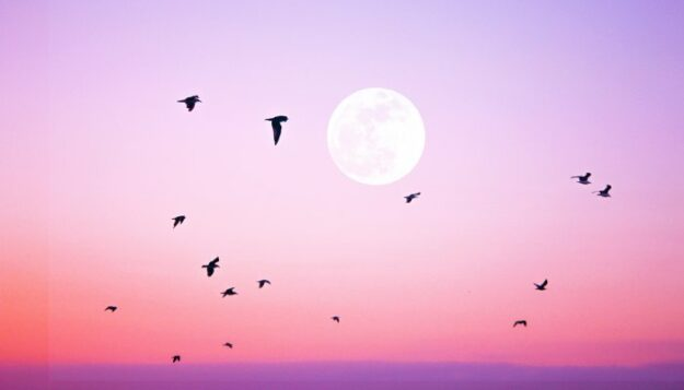 how-to-approach-october's-full-moon,-depending-on-your-zodiac-sign
